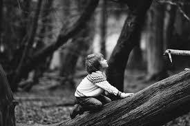 The Adventures of Little Kids & Big Treesby Stephen C. Schultz