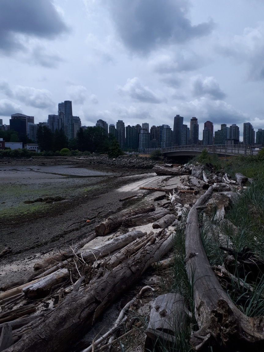Skyscrapers and Driftwood